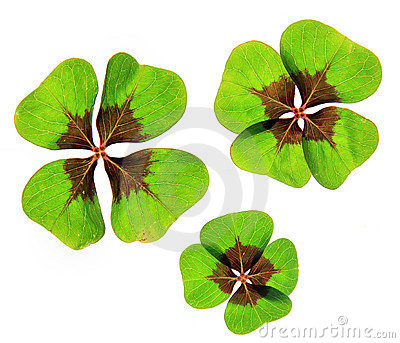 A four leaf lucky clover