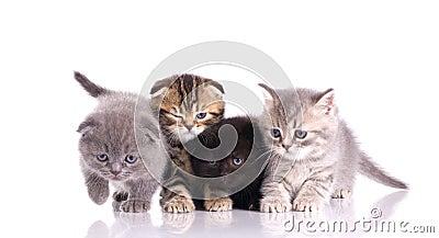 Four little  kittens