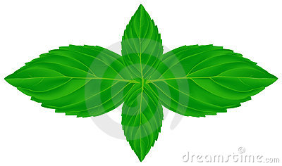 Four mint leaves illustration