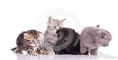 Four multicolored kittens