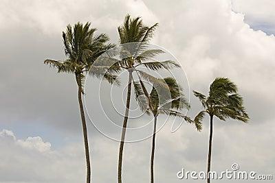 Four Palm Trees Stock Photo