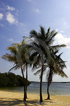 Free Four Palm Trees On A Beach Stock Images - 316154