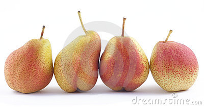 Four pears in a rank on white