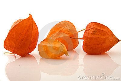 Four Physalis alkengi