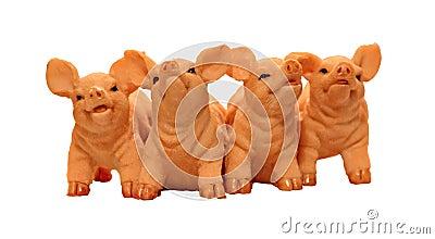 Four piglet pigs