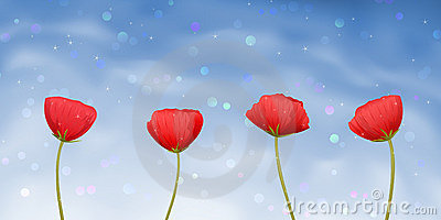 Four red poppy-flowers on blue background