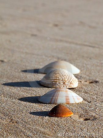Four sea shells on wet sand a beach