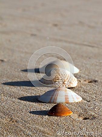 Four sea shells on wet sand a beach