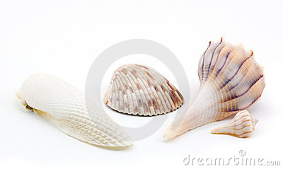 Four Seashells