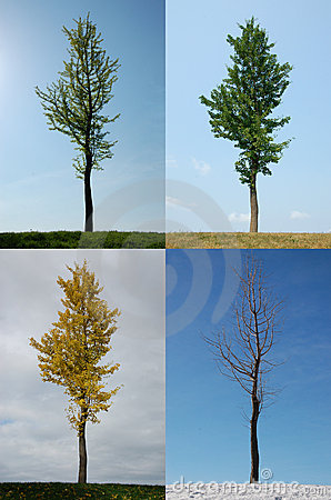 Free Four Seasons Royalty Free Stock Image - 4359556