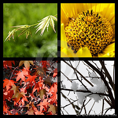 Free Four Seasons In Nature Stock Photos - 7455763