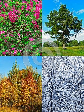 Four seasons (my photos)