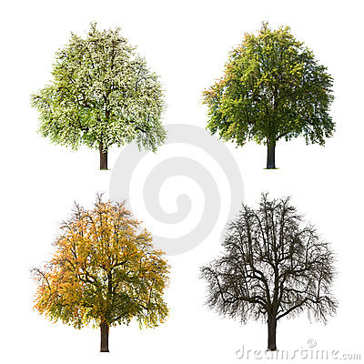 Four seasons of tree