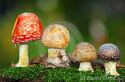 Four toadstools