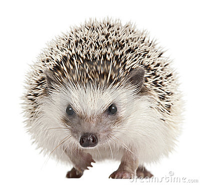 Hedgehog Stock Photos, Images, & Pictures - 11,935 Images