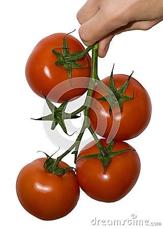 Four Tomato