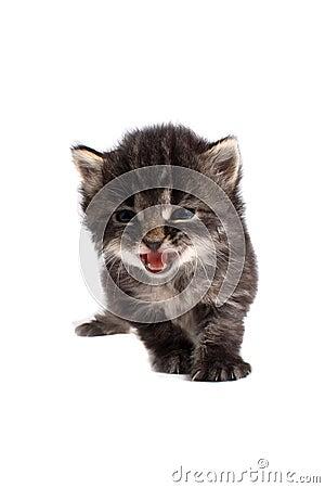 Four week old kitten meow