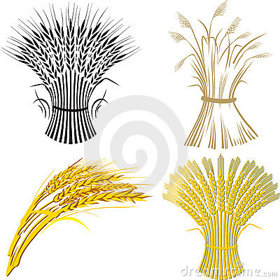 Free Four Wheat Sheaf Royalty Free Stock Images - 9921439