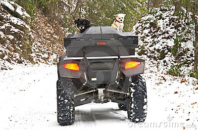 Four Wheeler and Dogs in Snow
