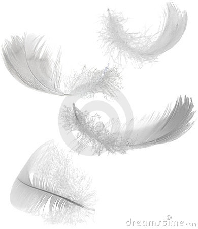 Free Four White Feathers Royalty Free Stock Photography - 7242467
