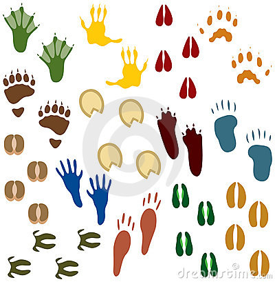 Free Fourteen Sets Of Animal Tracks Stock Photos - 1782103