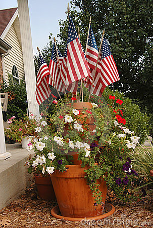 Fourth of July Plant