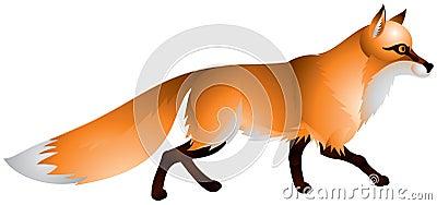 Fox con la piel roja y una cola espesa
