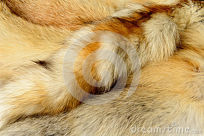 Fox fur animal texture background