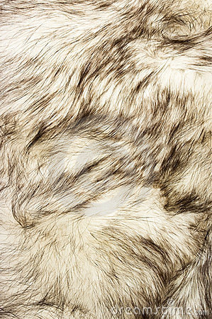 Fox fur texture