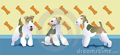 Fox terrier love