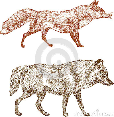 Fox and wolf
