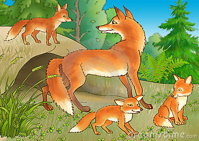 The fox and young foxes