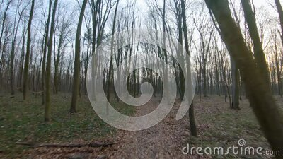 FPV drone flight quickly and maneuverable through an autumn or spring forest at sunset stock footage