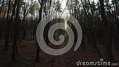 FPV-dronvlucht snel en wendbaar door een herfst- of lentebos bij zonsondergang stock videobeelden