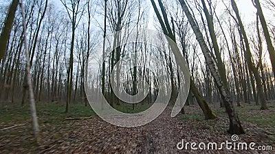 FPV-dronvlucht snel en wendbaar door een herfst- of lentebos bij zonsondergang stock footage