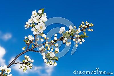 Frühlings-Zeit