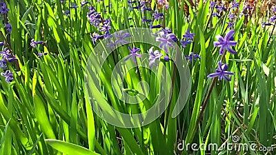 Frühlingsblumenfeld stock video footage