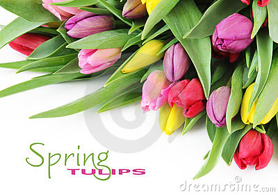Frühlingstulpeblumen