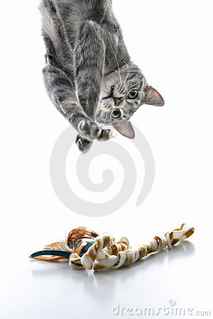 För katt som gray ner leker den randiga översidan
