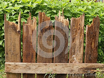 Fragment of fence of rotten boards