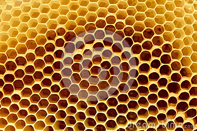 Fragment of honeycomb