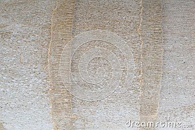 Fragment of palm bark