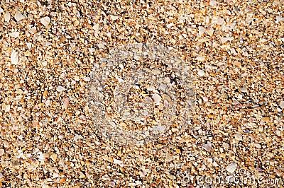 Fragments of seashells background