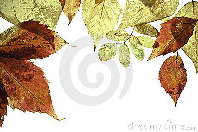 Frame with autumn leaves
