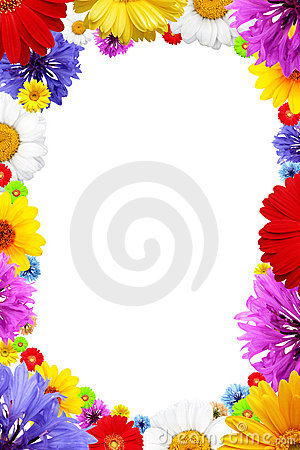 Frame of  colorful  summer flowers