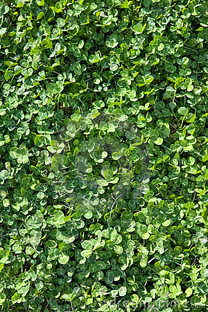Free Frame Filled With Sunny Clover In A Field Stock Image - 672561