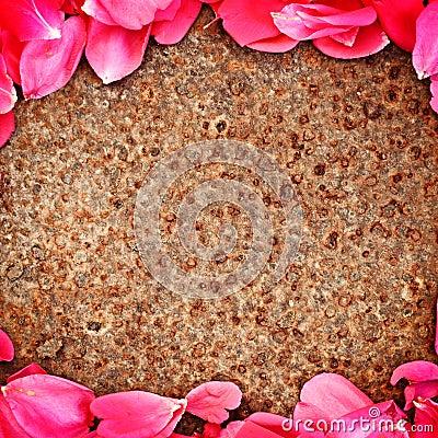 Frame of flower petal