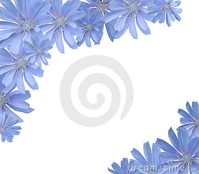 Frame with flowers(chicory)