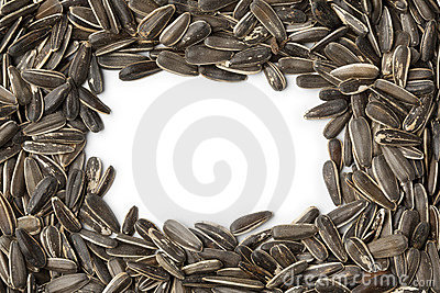 Frame of fresh sunflower seeds