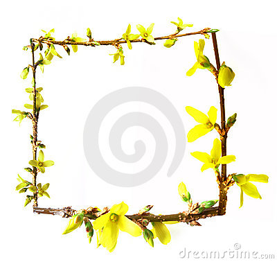 Free Frame From Spring Buds Forsythia Flowering Stock Image - 13471081